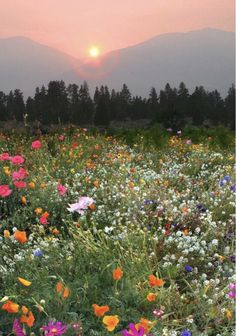 Best Home Plants Nature Aesthetic, Flower Aesthetic, Mother Earth, Mother Nature, Beautiful World, Beautiful Places, Wild Flowers, Beautiful Flowers, Theme Nature