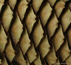 pinecone  #patterns and #textures