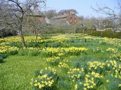 Home - National Garden Scheme Acorn Bank, Penrith, Landscape Architects, Cumbria, Lake District, Where The Heart Is, Days Out, Daffodils, Spring Flowers
