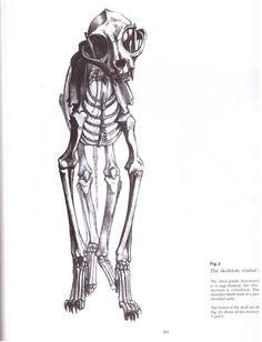 cat skeleton 3d 3ds | Животные | Pinterest | Skeletons and Cat