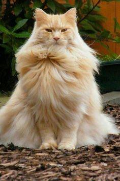 A very majestic cat