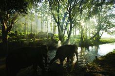 Elephant Forest, Thailand
