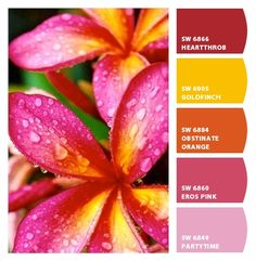 Plumeria colors from Chip It! by Sherwin-Williams