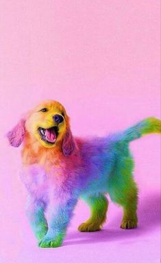 ME GUSTAN LO COLORES!!!!!!! Cute Pups, Cute Baby Puppies, Cute Babies, Cute Funny Animals, Cute Baby Animals, Funny Animal Pictures, Funny Dogs, Animals And Pets, Animals Images