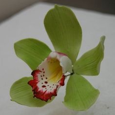 Handmade Green Cymbidium Orchid | Handmade gumpaste flowers.… | Flickr