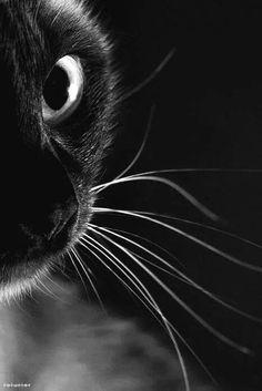 """""""Sempre me dá um #calafrio quando eu vejo um #gato que vê o que eu não posso ver"""" - Eleanor Farjeon"""