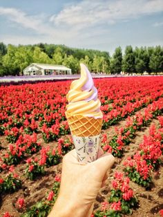 8 Fun and Interesting Things to Do and Eat in Hokkaido! (Summer Edition)