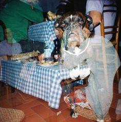 lomo diana mini, dog, multiple exposition, summer, dinner