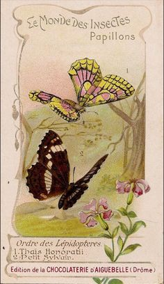 Rare victorian trade cards 1890 's Butterfly cocoa chocolate Advertising