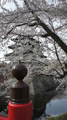 Cherry blossoms ,Japan by takashi_matsumura,