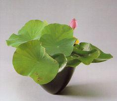 遠州・華道 花形の特徴 自由花, Lotus