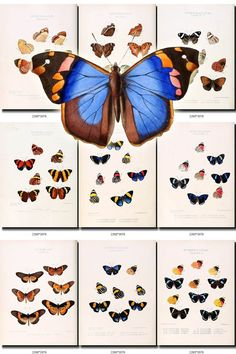 BUTTERFLIES-37 Collection of 72 vintage illustrations Lapidaptera Entomologic pictures images High resolution digital download printable           data-share-from=listing        >           <span class=etsy-icon