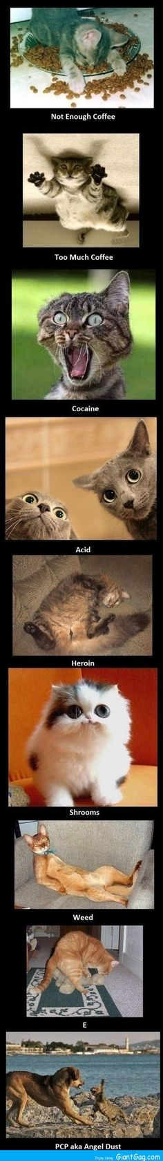 Cats on drugs STEP 1