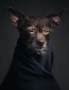 """""""Expressive portraits of animals by Vincent Lagrange reflect powerful """"human"""" emotions. I love this photo. Personally, I don't anthropomorphise dogs because not being human is part of what's so great about them. I Love Dogs, Cute Dogs, Funny Animals, Cute Animals, Animals Dog, Wild Animals, Photo Animaliere, Photo Tips, Tier Fotos"""