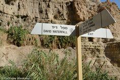 Wegweiser durch die Wüstenoase En Gedi