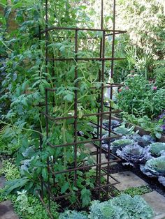 Make permanent trellises from rebar welded in a tall rectangular shape. It is heavy enough to stay in place and is sculptural even when it sits empty in the winter.