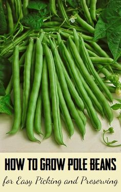 101 Gardening: How to Grow Pole Beans for Easy Picking and Preserving
