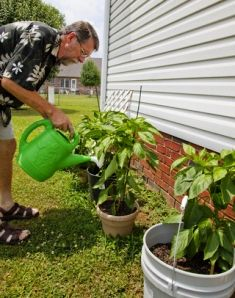 Growing tomatoes in buckets~ Great idea if you're limited on garden space.. I move mine indoors in the winter under grow lights and continue to enjoy fresh tomatoes!!