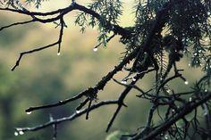 Qu'il pleut, qu'il vente, qu'il tonne, désormais plus rien ne m'étonne !!! by driss el yousfi