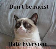 Grumpy Cat Quotes, Gato Grumpy, Grumpy Cat Good, Funny Grumpy Cat Memes, Funny Animal Memes, Funny Animal Pictures, Funny Animals, Funny Memes, Grumpy Kitty