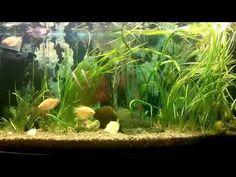 Water World #44 / Наконец то! Смена освещения в аквариумах / LED light - YouTube