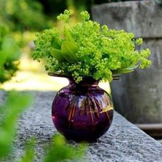 green arrangement by amparo Purple Vase, Green Vase, Interior Garden, Home Interior, Perfect World, Plant Design, Simple Pleasures, Beautiful Flowers, Beautiful Bouquets