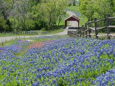 Washington County, TX