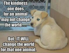 plz re-pin this to stop animal abuse and neglect