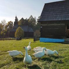 Beautiful countryside scene at Stara Lubovna Adventure Travel, Countryside, Garden Sculpture, Travel Photography, Scene, Beautiful, Instagram, Outdoor Decor, Blog
