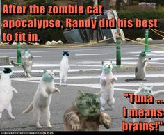 """After the zombie cat apocalypse, Randy did his best to fit in.  """"Tuna ...                                                                           I means                                                    brains!"""""""