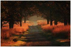 Path in Deelerwoud by Jaap van den Helm