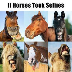 If horses took selfies!