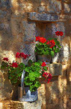 New Flowers Box Garden Red Geraniums Ideas