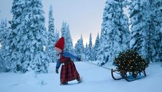winter landscapes by photographer Per Breiehagen NOrdic Winter Norwegian Christmas Elf pulling her Christmas tree through the snow