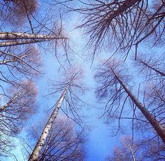 神秘的な冬の森