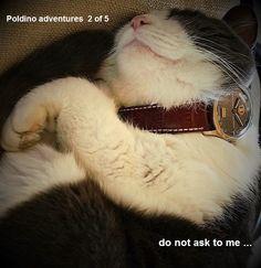 Passion, Unisex, Animals, Animales, Animaux, Animal, Animais
