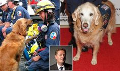 PIERS MORGAN praises 9/11 dog Bretagne who was put down on Monday | Daily Mail Online