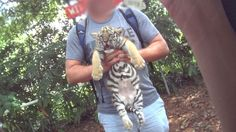 Dade City's Wild Things (DCWT)—a roadside zoo in Florida—takes photos of people using tiger cubs as props. But animals aren't …