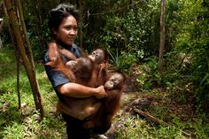 my dream job (Borneo)    http://blog.hmns.org/wp-content/uploads/2011/05/NEWbtbw_stl_012_h-8.jpg
