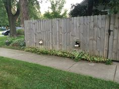 Just moved in to the new house. I got to meet the neighbor dogs on my afternoon walk. - Imgur