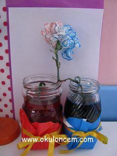 Renkli Çiçek Deneyi