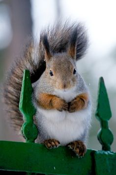 a normal looking squirrel