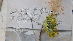 Dandelion, Van, Flowers, Plants, Dandelions, Plant, Taraxacum Officinale, Vans, Royal Icing Flowers