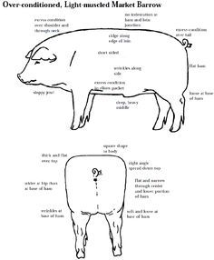 pig labeled body parts diagram sketch coloring page homeschool rh pinterest com
