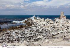 Südafrika #7: Die Pinguine von Betty's Bay (Stony Point) Stony Point, Beach, Photos, Outdoor, Outdoors, Pictures, The Beach, Beaches, Outdoor Games
