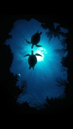 flag of Ocean Simply breathtaking - sea life Baby Sea Turtles, Cute Turtles, Turtle Time, Water Animals, Ocean Creatures, Ocean Life, Marine Life, Cute Baby Animals, Belle Photo
