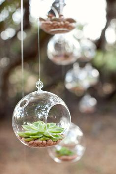 Hanging Chive Terrariums