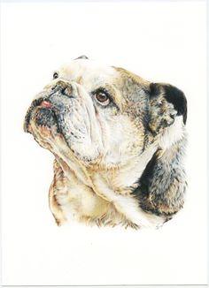 Bulldog Inglés. English Bulldog. Illustration pencil. Ilustración lápiz. Dog portrait Illustration, Dogs, Portraits, English Bulldogs, Animales, Greyhounds, Art, Illustrations, Doggies