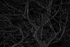 "Saatchi Art Artist Fabio Santagiuliana; Photography, ""Untitled -  Limited Edition 10"" #art"