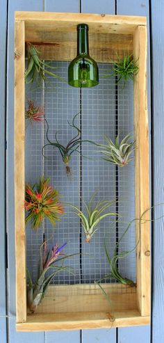 Air Plant Wall Art Hanger
